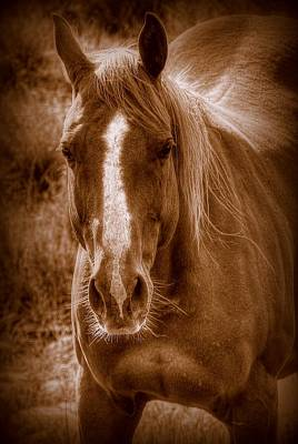 Quarter Horses Photograph - A  ''mare'' Ica by Ryan Smith