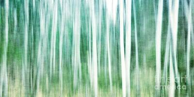 Forest Photograph - A Matter Of Blues by Priska Wettstein