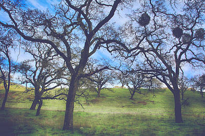 Bare Trees Photograph - A Meeting Of Men by Laurie Search