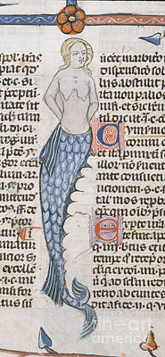 Of Mermaid Photograph - A Mermaid by British Library