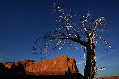 Photograph - A Mesquite Trees And Buttes by Raul Touzon