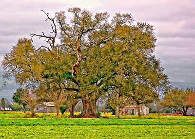 Oak Alley Photograph - A Mighty Oak by Steve Harrington