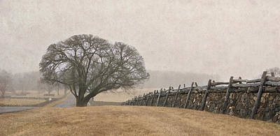 Photograph - A Misty Morning In Horse Country by Carol Erikson