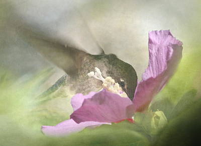 A Moment In The Flower Art Print by Angie Vogel