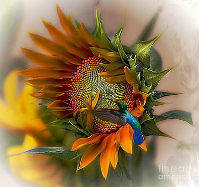 Sunflowers Royalty-Free and Rights-Managed Images - A Moment In Time by John  Kolenberg