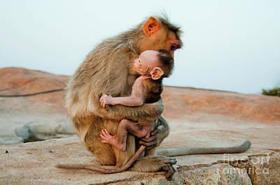 Karnataka Photograph - A Monkey Holding Her Newborn Baby by Linka A Odom
