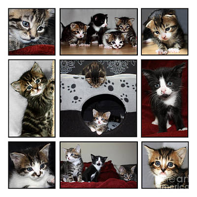 Photograph - A Montage Of Kittens by Terri Waters