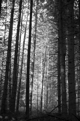 Moonlit Night Photograph - A Moonlit Forest by Georgia Fowler
