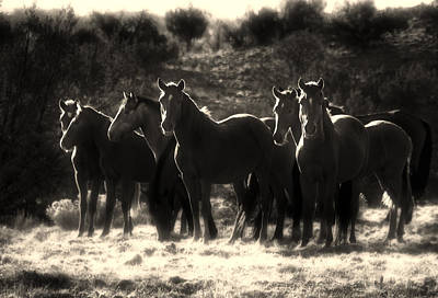 Sw New Mexico Photograph - A Morning Moment by Roch Hart