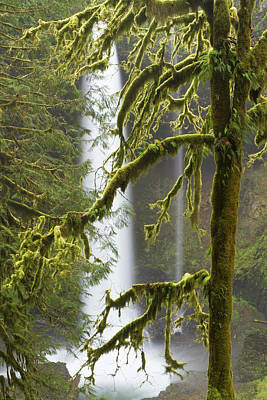 Sutton Photograph - A Moss Covered Tree Frames North Falls by William Sutton