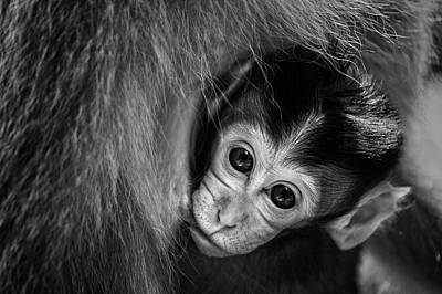 Monkey Photograph - A Mother's Love by Gunarto Song