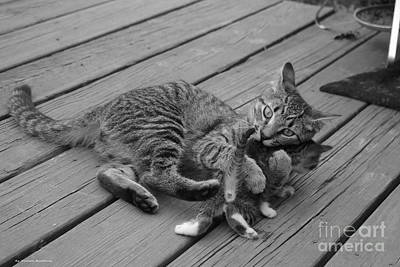 Photograph - A Mother's Love by Tannis  Baldwin