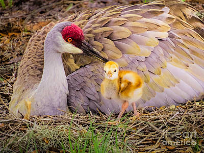 Baby Bird Photograph - A Mother's Lovely Touch by Zina Stromberg