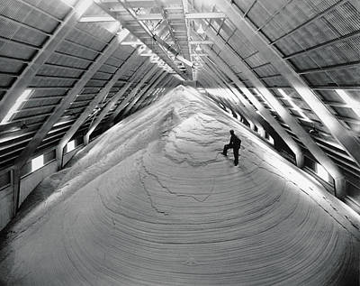 A Mountain Of Raw Sugar Print by Underwood Archives