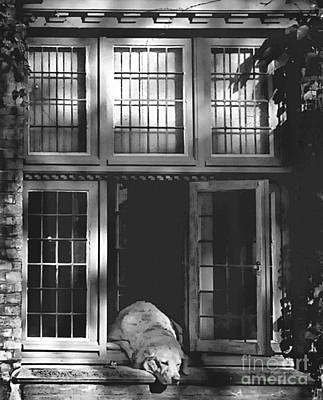 Photograph - A Nap In The Sun Bw by Louise Fahy