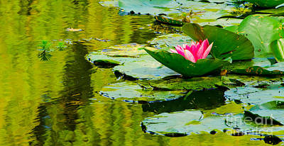 Photograph - Claude Monet's Water Garden Featuring A Single Pink Lotus by MaryJane Armstrong