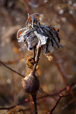 Photograph - A Natural Beauty by Beth Akerman