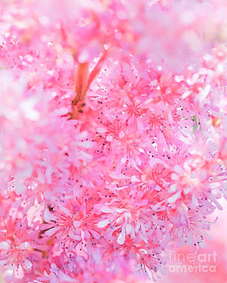 Photograph - A Natural Pink Bouquet by David Perry Lawrence