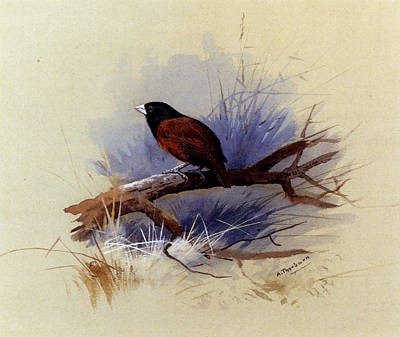 A Nepalese Black Headed Nun In The Branch Of A Tree Art Print by Celestial Images