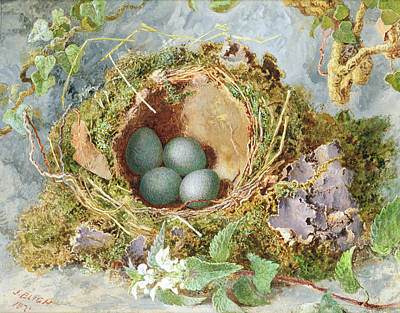 Nature Study Painting - A Nest Of Eggs, 1871 by Jabez Bligh
