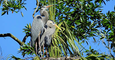 Photograph - A Nesting Pair In Homosassa by Judy Wanamaker