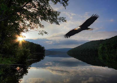 American Eagle Photograph - A New Beginning by Lori Deiter