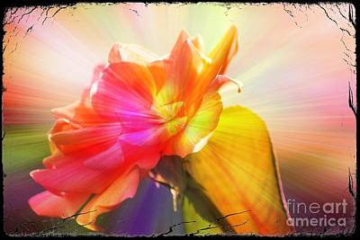 Art Print featuring the photograph A New Day by Lori Mellen-Pagliaro