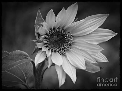 Photograph - A New Hope Bw by Chalet Roome-Rigdon