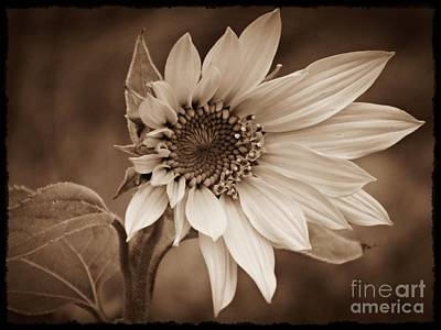 Photograph - A New Hope Sepia by Chalet Roome-Rigdon
