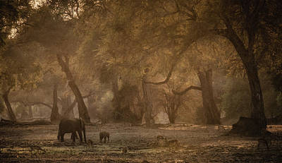 Baby Elephant Wall Art - Photograph - A New Morning by Giovanni Casini