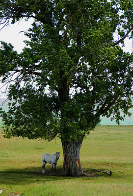 Photograph - A One Horse Tree And Its Horse					 by Jacqueline  DiAnne Wasson