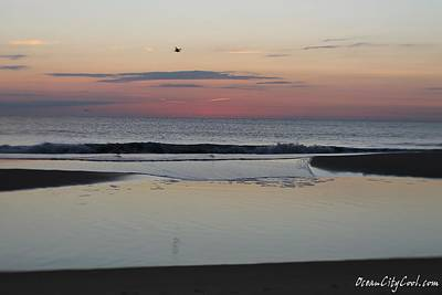 Print featuring the photograph A One Seagull Sunrise by Robert Banach
