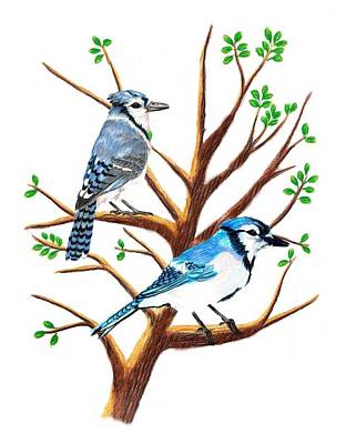 Bluejay Drawing - A Pair Of Bluejays by Stephanie Davis