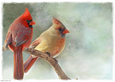 Photograph - A Pair Of Northern Cardinals by Debbie Portwood