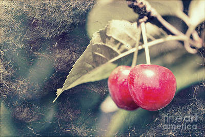 Photograph - A Pair Of Cherries by Linda Lees