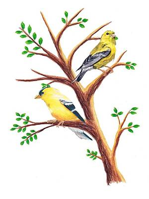 Goldfinch Drawing - A Pair Of Goldfinches by Stephanie Davis