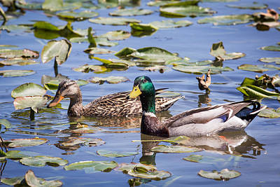 Photograph - A Pair Of Mallards by Dale Kincaid