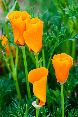 Photograph - A Pair Of Orange by Melinda Ledsome