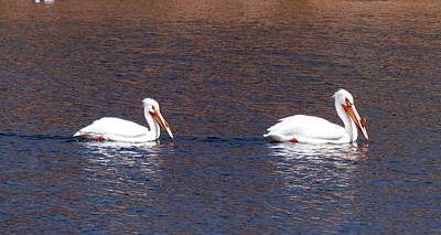 Photograph - A Pair Of Pelicans by Thomas Samida