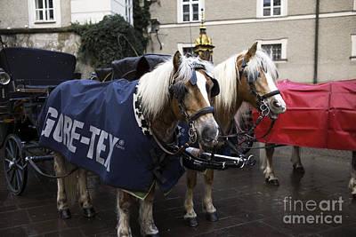 A Pair Of Ponies In Salzburg Art Print