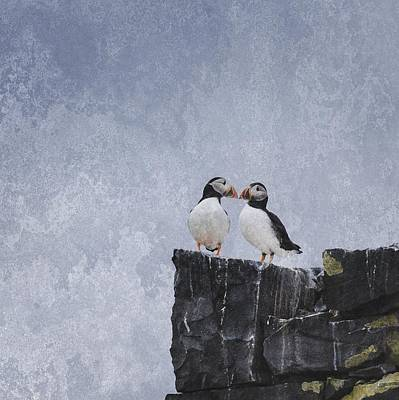 Puffin Digital Art - A Pair Of Puffins by Annmarie Meredith