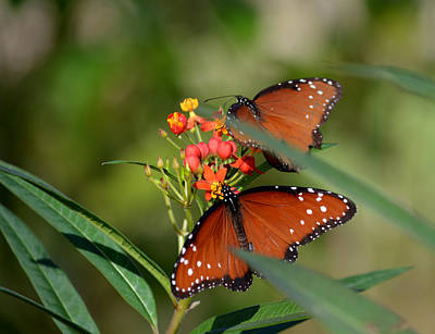 Photograph - A Pair Of Queens by Judy Wanamaker