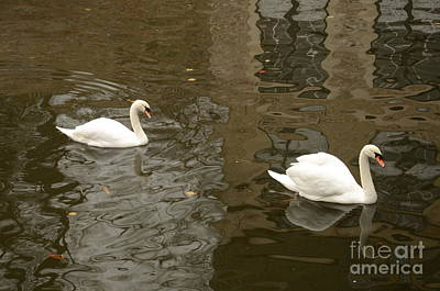 Art Print featuring the photograph A Pair Of Swans Bruges Belgium by Imran Ahmed