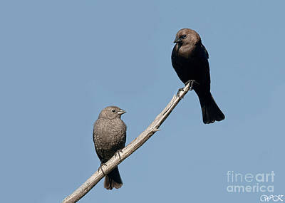 Photograph - A Pair by Wanda Krack