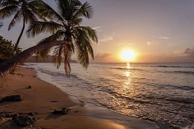 Photograph - A Palm Tree Silhouette At Sunset  St by Jenna Szerlag