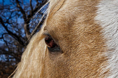 A Palomino's Eye. Art Print by Doug Long