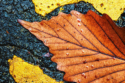 Photograph - A Parking Space For Autumn Leaf by Gary Slawsky