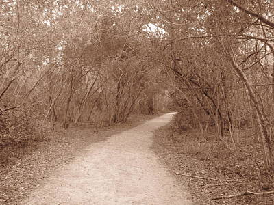 Art Print featuring the photograph A Path In Life by Beth Vincent