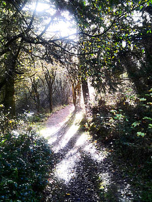 Photograph - A Path In Sunlight - Forest Path by Marie Jamieson
