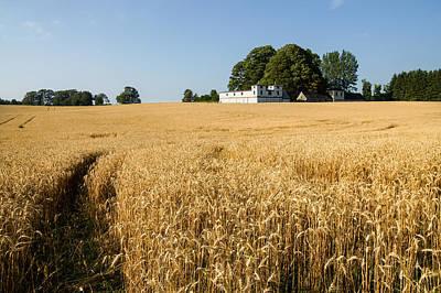 Photograph - A Path In The Golden Wheat Field by Georgia Mizuleva